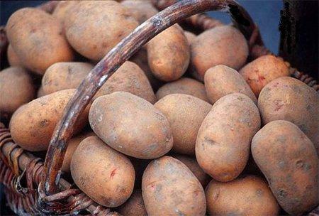 Подготовка участка для посадки картофеля