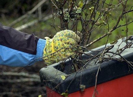 Выбор измельчителя для садового мусора