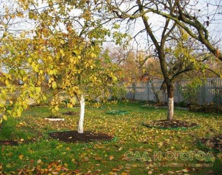 Уход за садом в сентябре