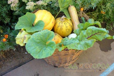 Подзимний посев овощей для Урала