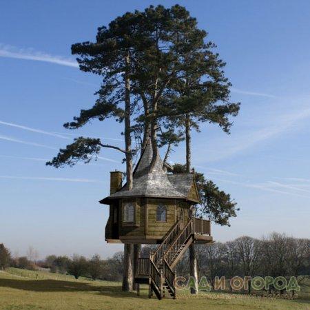 Деревья у зданий. Возможные проблемы и способы их решения