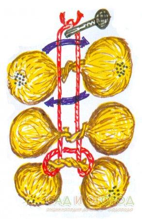 Плетем луковые косы