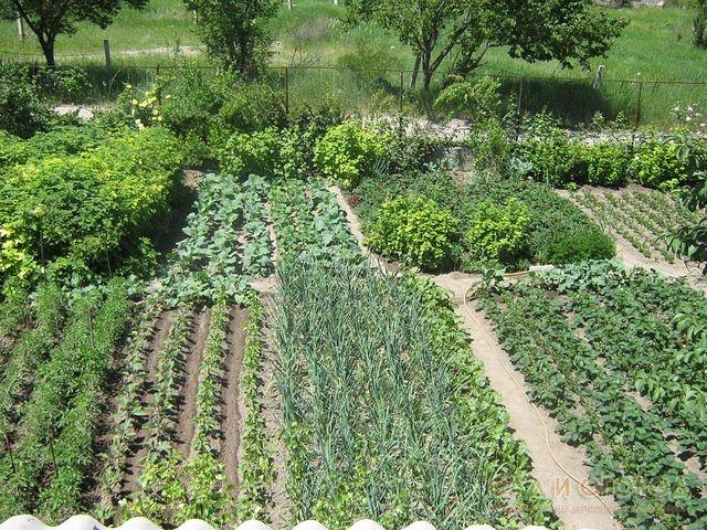 Как правильно посадить растения в огороде 1102 33