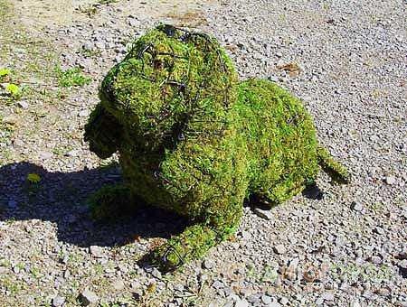 топиарий - форма собаки