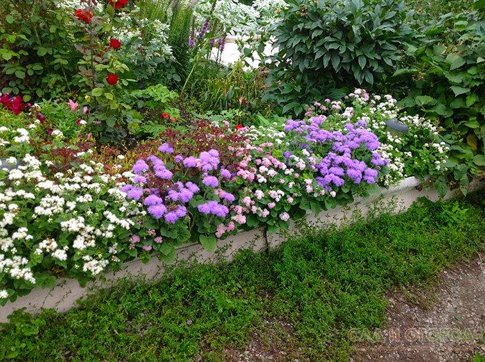 растения для клумб