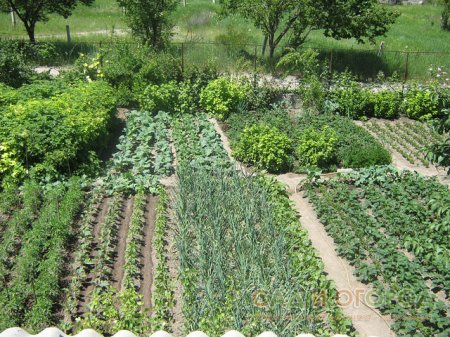 Повышаем урожайность участка