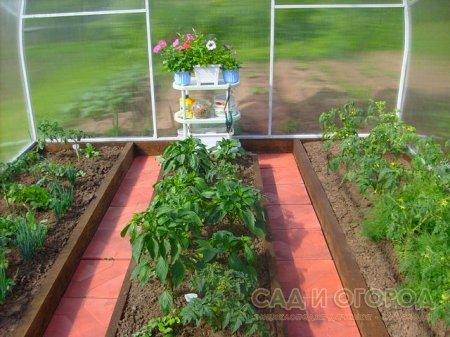 Совместимость культур для выращивания в теплице