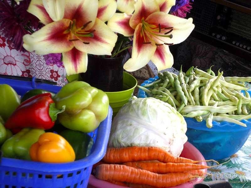 «Вредные» советы огородникам и садоводам!