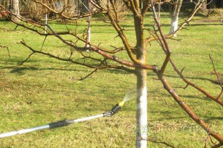 Подготовка садовых деревьев к новому сезону