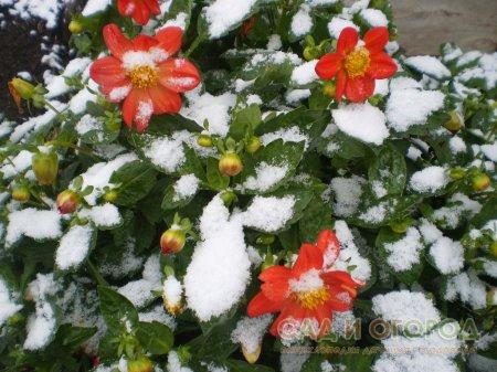 Октябрь в саду для цветовода