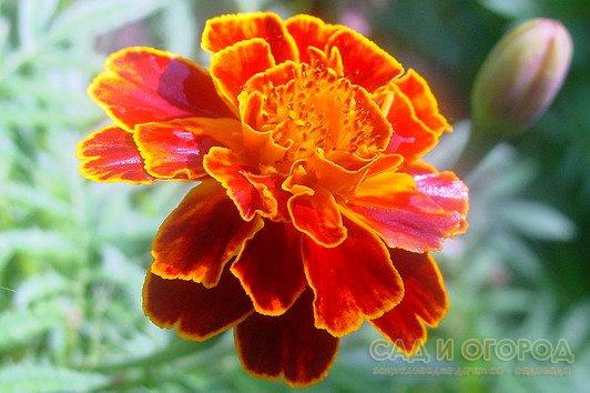 Программа улучшения зрения цветок