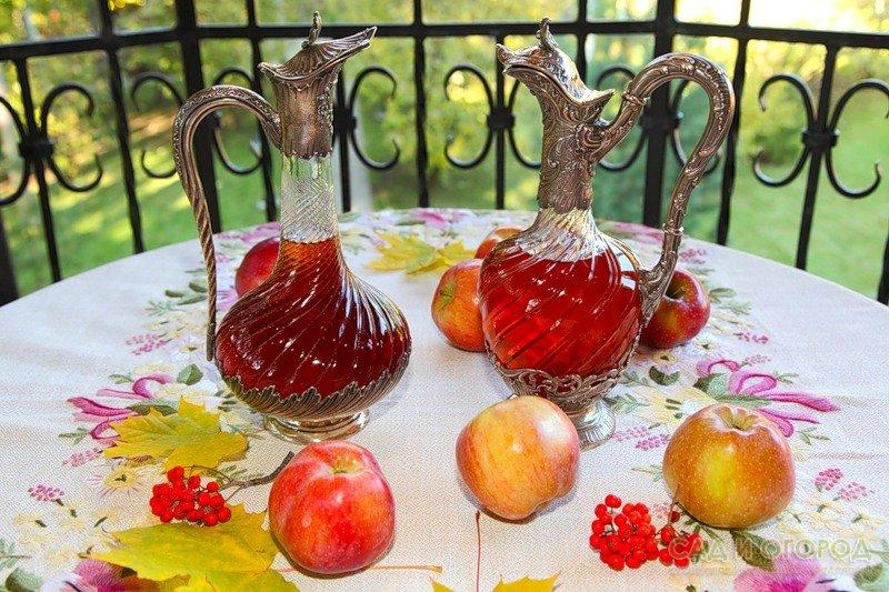 Как сделать с яблок вино в домашних условиях